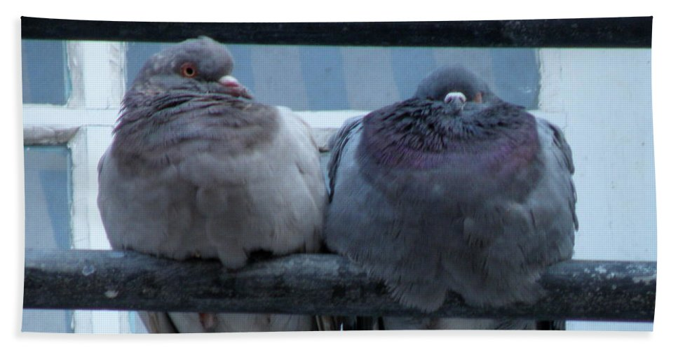 Pigeons Hand Towel featuring the photograph Pigeons Perching by Lainie Wrightson
