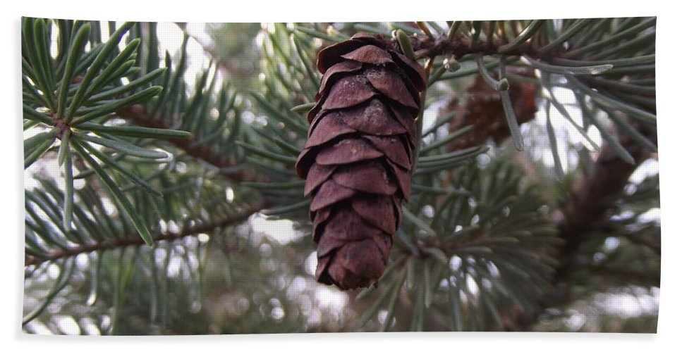 Pine Hand Towel featuring the photograph Pine Cone by Bonfire Photography