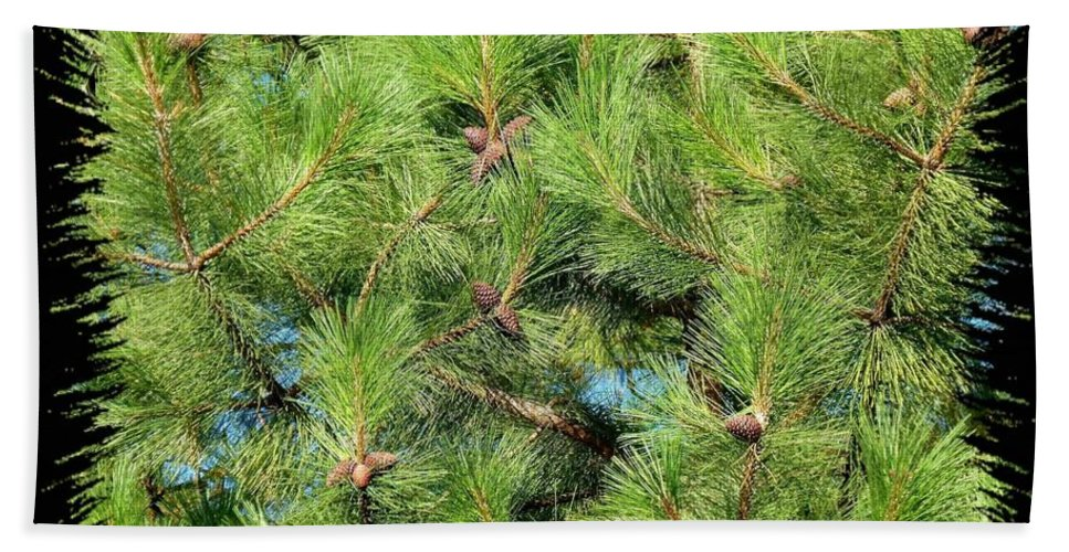 Pine Cones Bath Sheet featuring the photograph Pine Cones And Needles by Will Borden