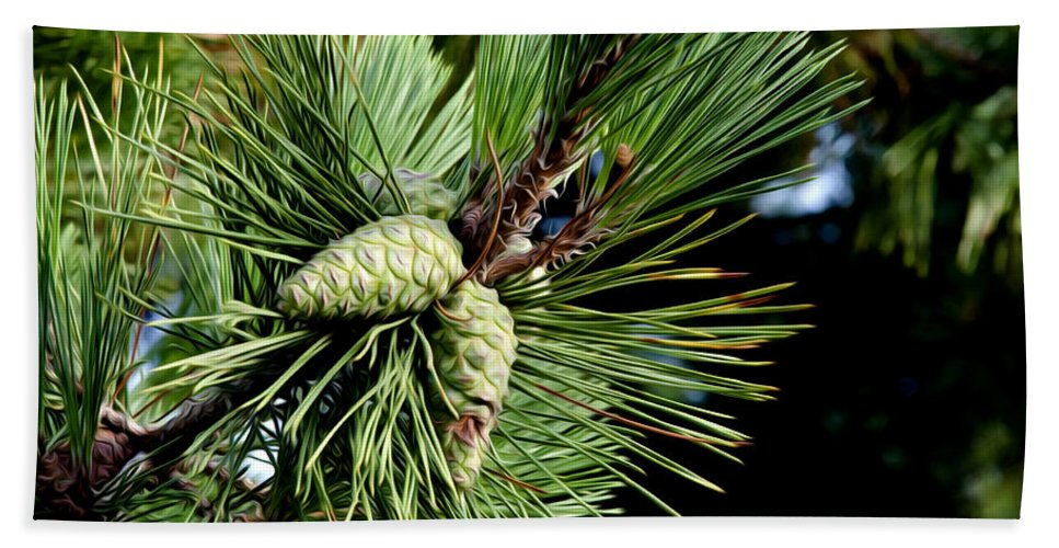 Pine Cones In A Pine Tree Hand Towel featuring the photograph Pine Cones In A Pine Tree by Bill Cannon
