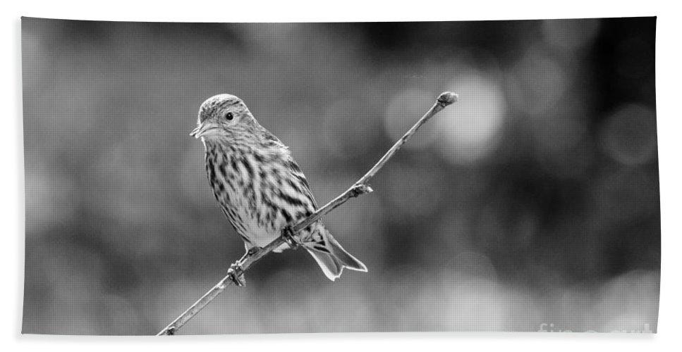 Bird Hand Towel featuring the photograph Pine Siskin by Cheryl Baxter