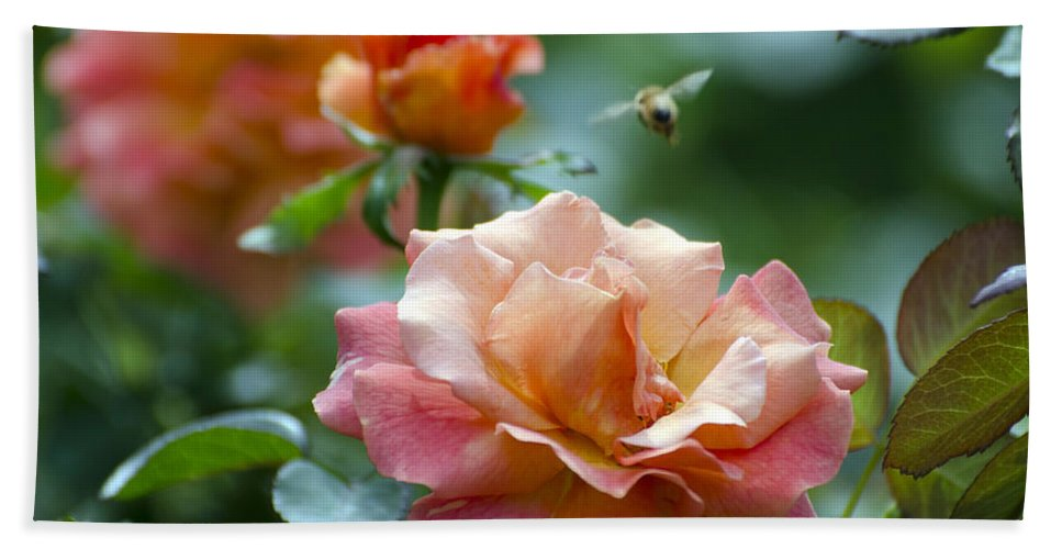Rose Bath Sheet featuring the photograph Pink And Orange Floribunda Rose With Bee by Terri Winkler