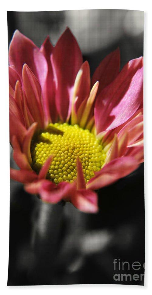 Yhun Suarez Hand Towel featuring the photograph Pink Chrysanthemum by Yhun Suarez