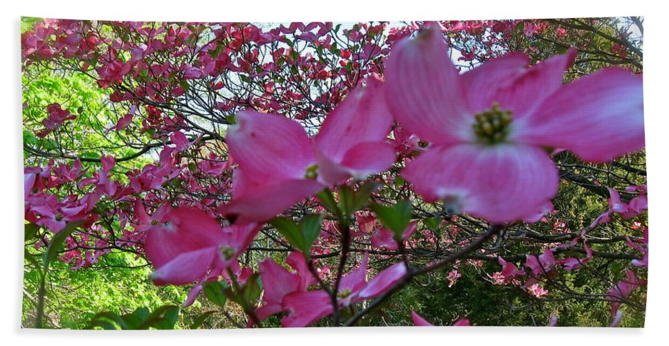 Pink Dogwood Tree Hand Towel featuring the photograph Pink Dogwood by Nancy Patterson
