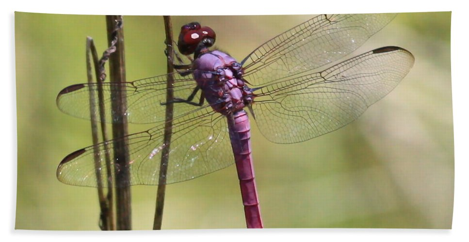 Dragonfly Bath Sheet featuring the photograph Pink Dragonfly With Sparkly Wings by Carol Groenen