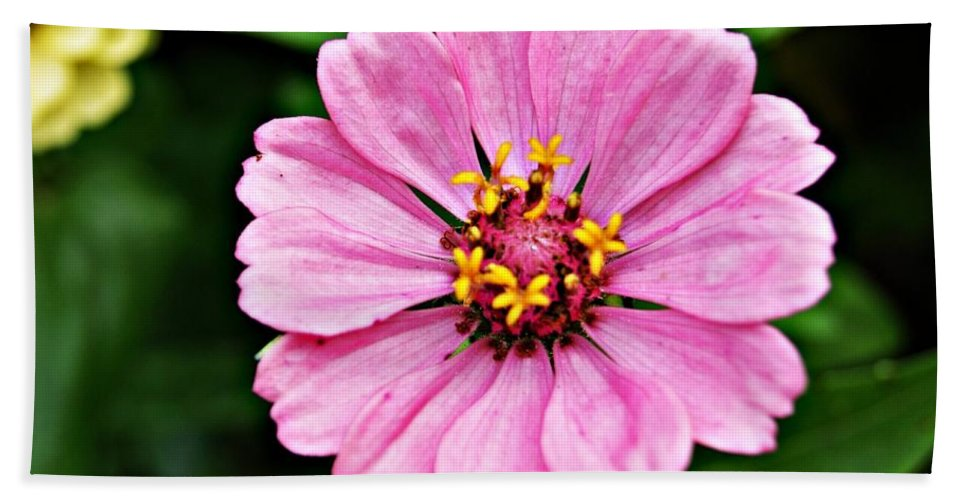 Pink Hand Towel featuring the photograph Pink Flower 4 by Joe Faherty