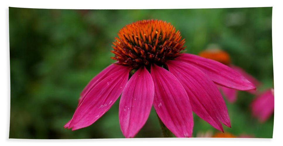 Pink Bath Sheet featuring the photograph Pink Flower by Alan Hutchins