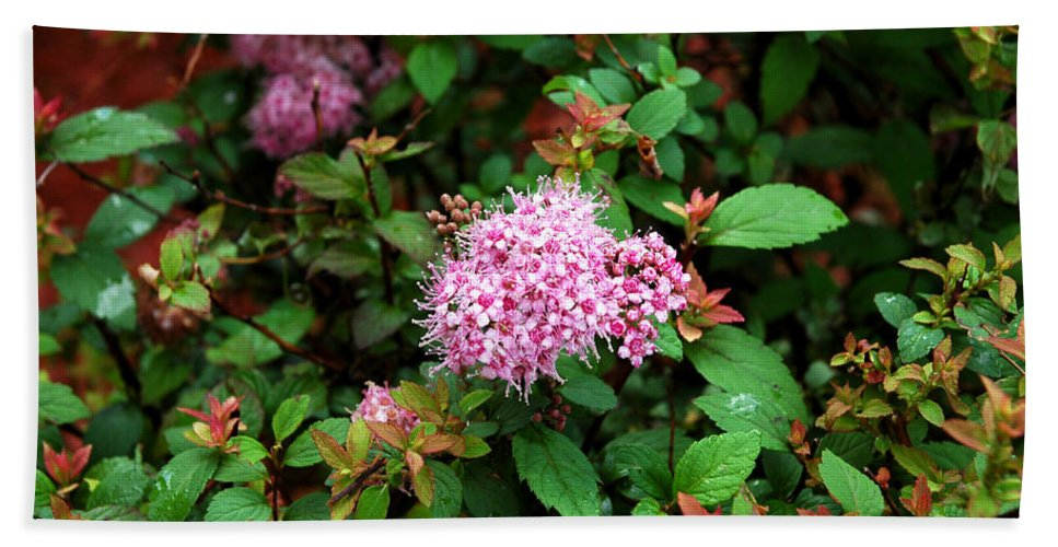 Usa Bath Sheet featuring the photograph Pink Flowers Of Little Bavaria by LeeAnn McLaneGoetz McLaneGoetzStudioLLCcom