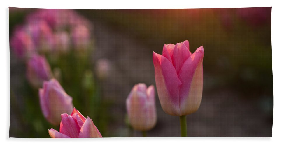 Tulip Bath Sheet featuring the photograph Pink Glory by Mike Reid