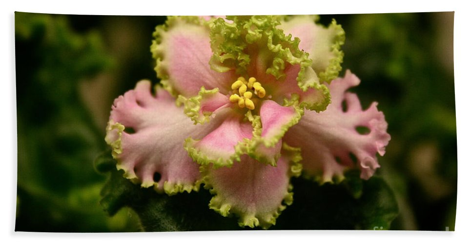 Tropical Plant Bath Sheet featuring the photograph Pink Green Ruffles by Susan Herber