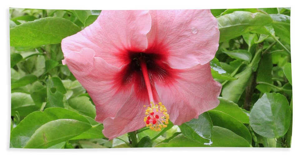 Pink Hibiscus Bath Sheet featuring the photograph Pink Hibiscus V2 by Douglas Barnard
