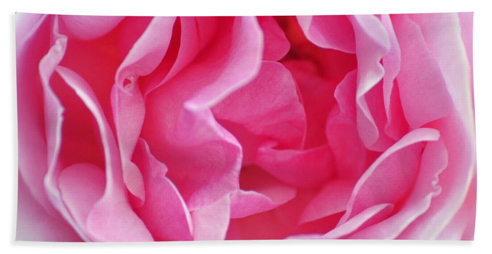 Pink Hand Towel featuring the photograph Pink March Rose 2012 Limited Edition by Clayton Bruster