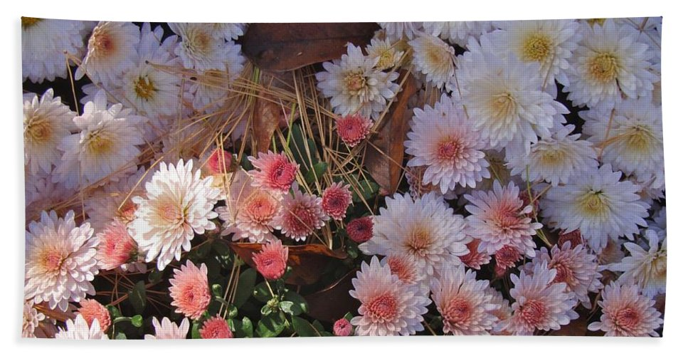Flower Hand Towel featuring the photograph Pink Mum by Joseph Yarbrough