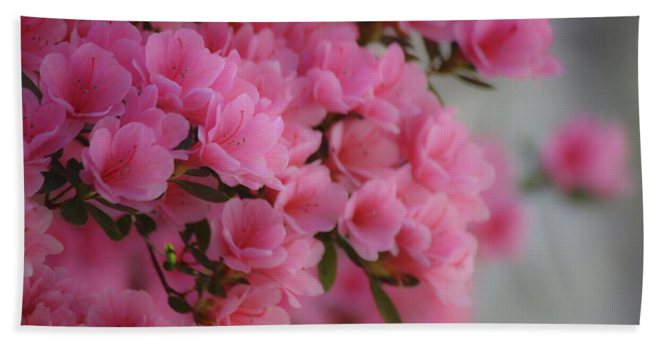 Azalea Hand Towel featuring the photograph Pink Passion by Teresa Mucha