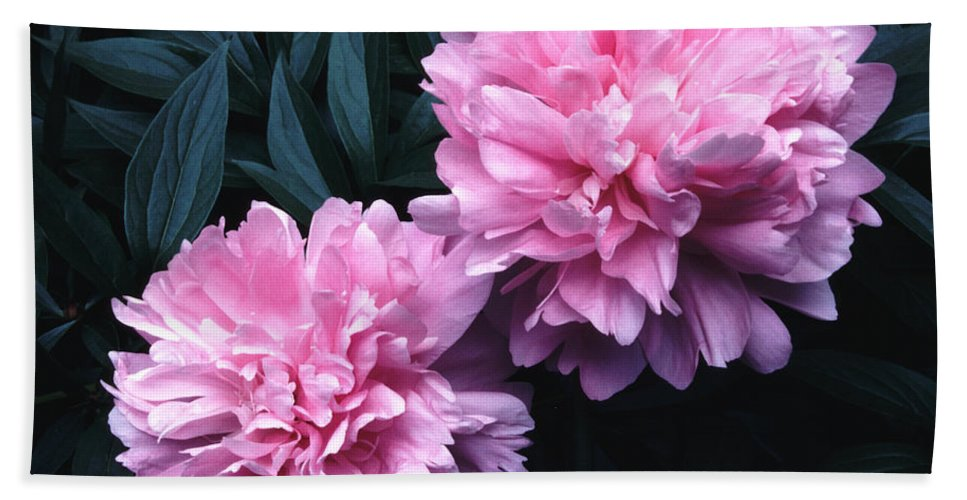 Flowers Bath Sheet featuring the photograph Pink Peony Pair by Tom Wurl