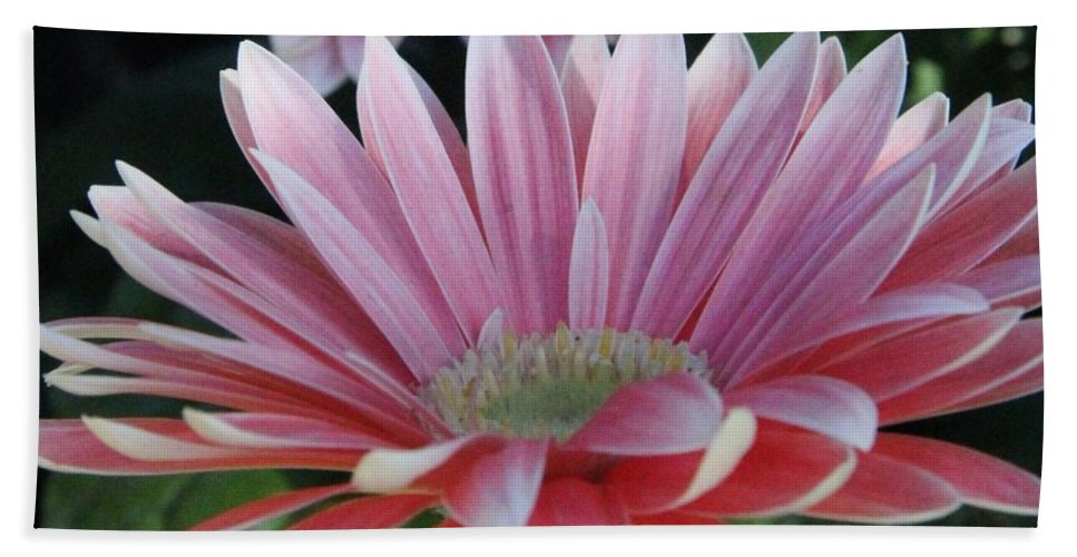 Bath Sheet featuring the photograph Pink Petals by Diane Greco-Lesser