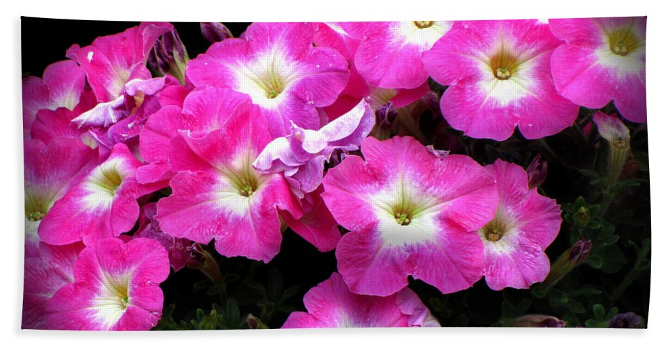 Petunias Bath Sheet featuring the photograph Pink Petunias by Ms Judi