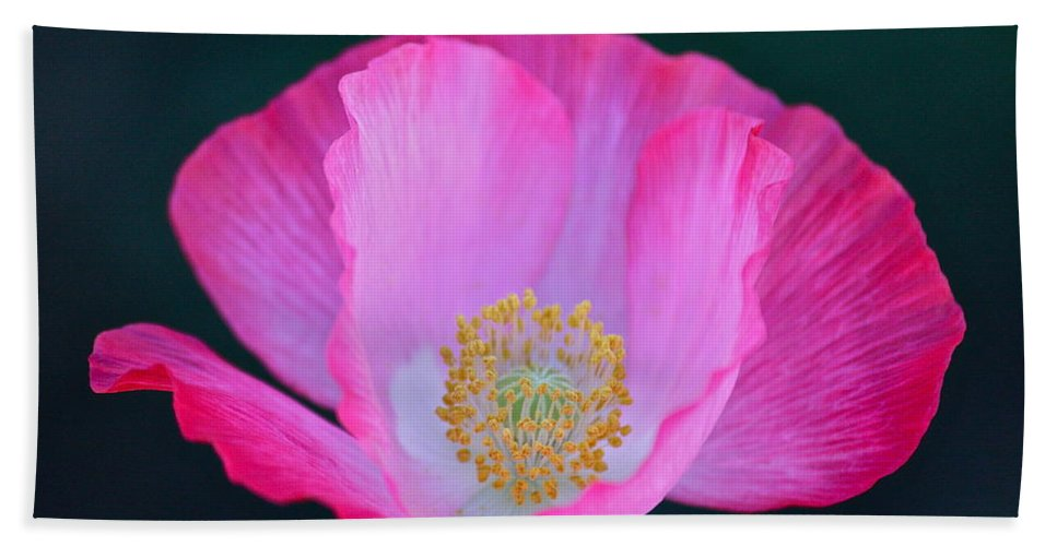 Flowers Bath Sheet featuring the photograph Pink Poppy 2 by Diana Hatcher