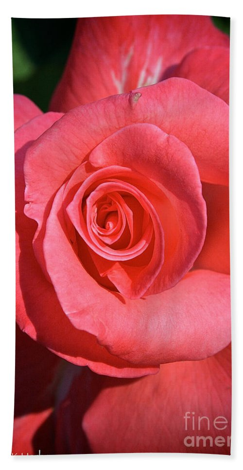 Outdoors Hand Towel featuring the photograph Pink Tea Rose by Susan Herber