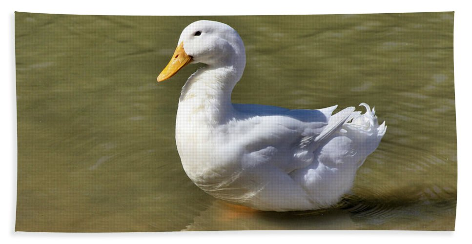 Pintail Bath Sheet featuring the photograph Pintail by Kristin Elmquist