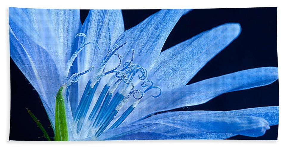 Flower Pistil Hand Towel featuring the photograph Pistil's Of Chicory by Randall Branham