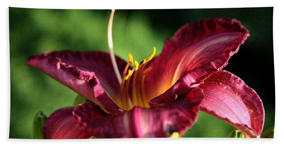 Floral Hand Towel featuring the photograph Pistons Of The Pink Yellow Lily by Donna Corless