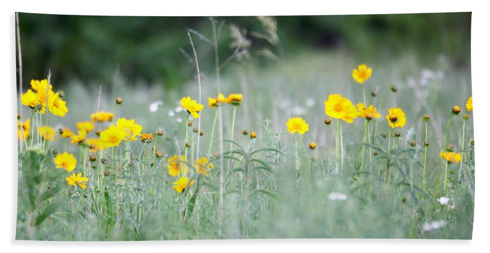 Yellow Bath Sheet featuring the photograph Plains Yellow Daisy by Andrew Dyer Photography