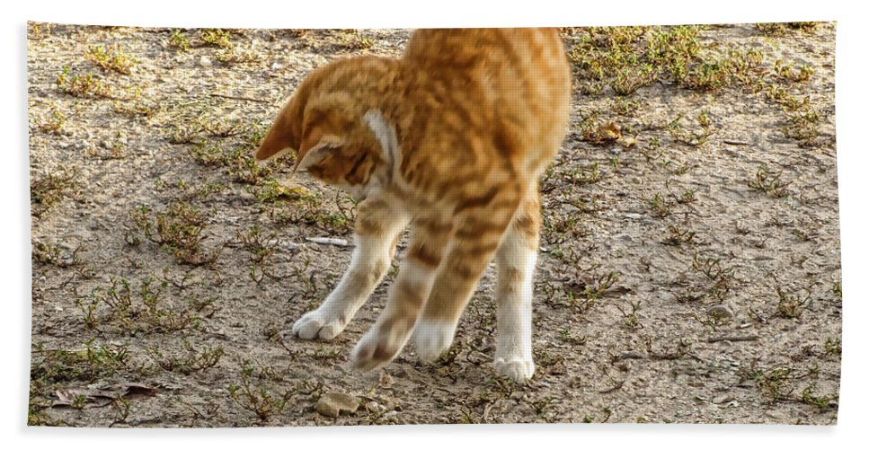 Nature Bath Sheet featuring the photograph Playful Yellow Kitty by Debbie Portwood