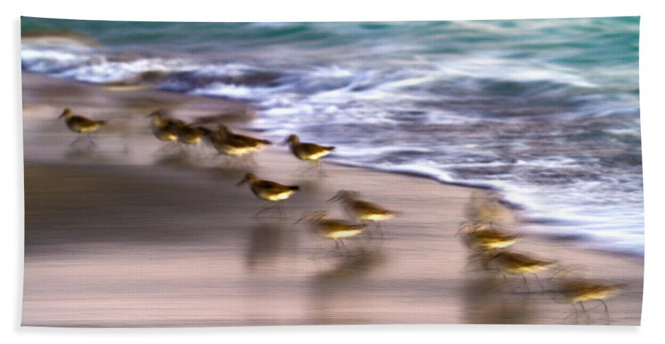 Florida Bath Sheet featuring the photograph Playing Pipers by Betsy Knapp