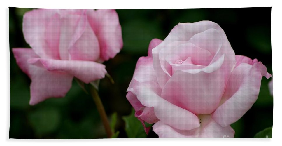 Roses Bath Sheet featuring the photograph Pleasurable Pink by Living Color Photography Lorraine Lynch