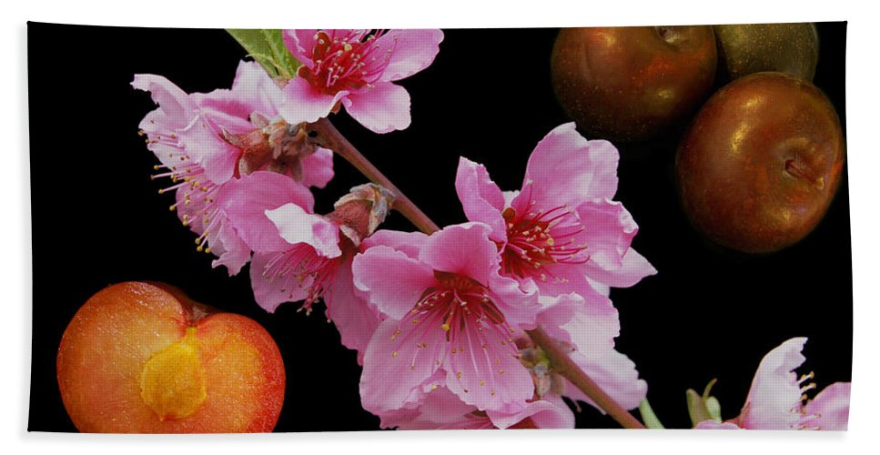Agriculture Bath Sheet featuring the photograph Plum Beautiful by Michael Peychich