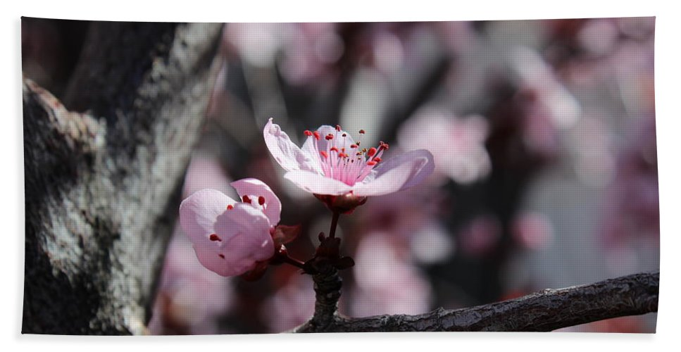 Floral Bath Sheet featuring the photograph Plum Blossoms 9 by Kume Bryant