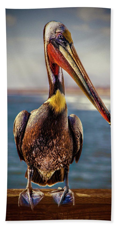 Pelican Hand Towel featuring the photograph Plump Peter Pelican's Pier Photo Pose by Chris Lord