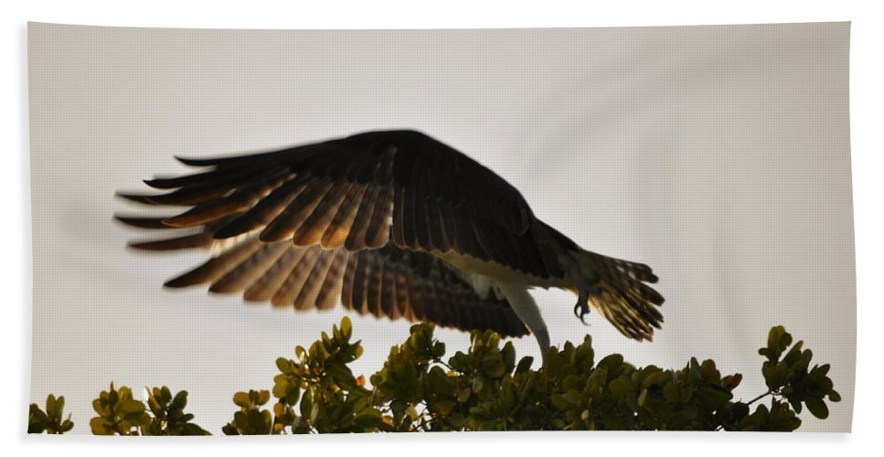 Osprey Taking Flight Bath Towel featuring the photograph Poetry in Motion by Christine Stonebridge