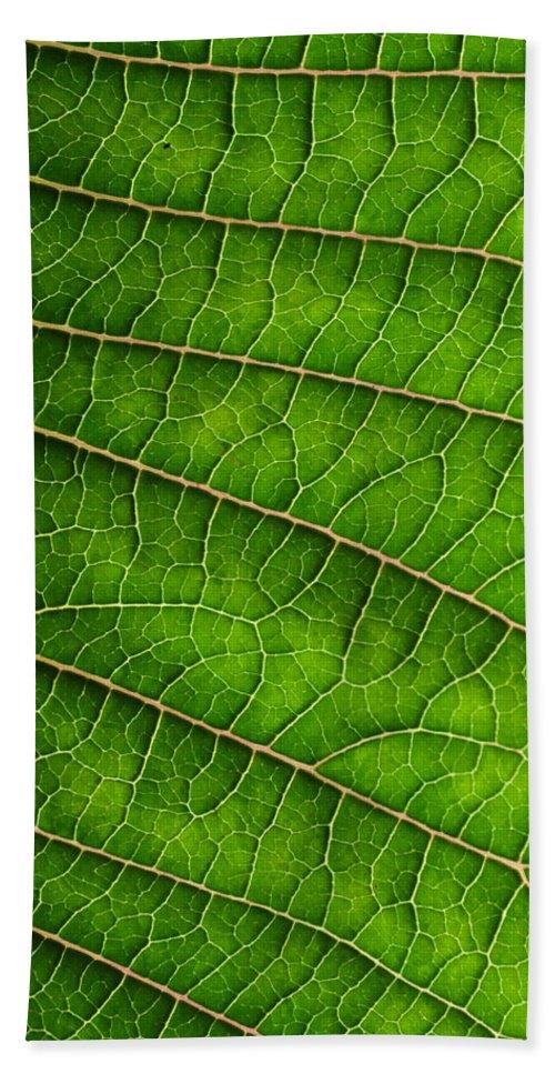 J.d. Grimes Bath Sheet featuring the photograph Poinsettia Leaf IIi by JD Grimes