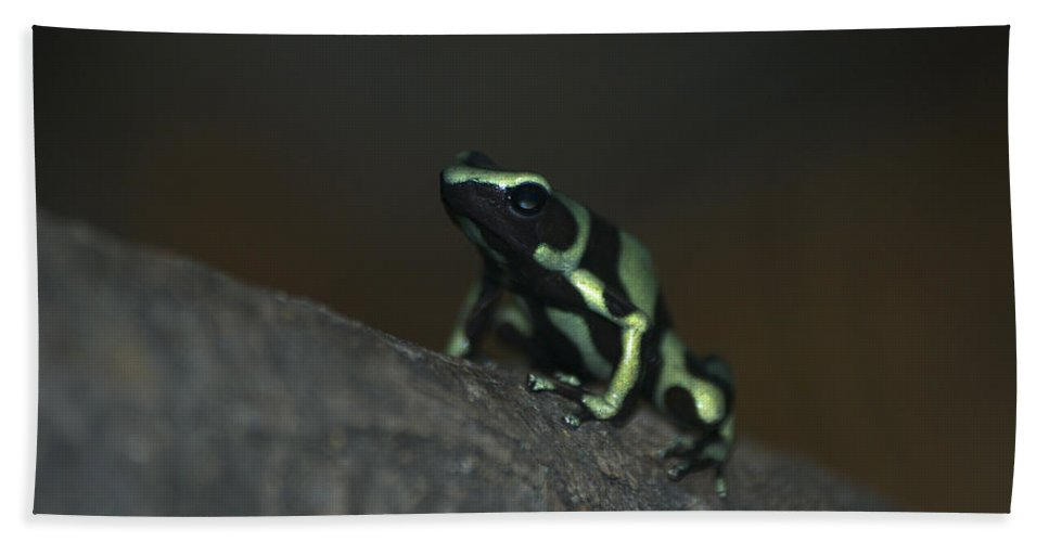 Animals Hand Towel featuring the digital art Poisonous Green Frog 03 by Thomas Woolworth
