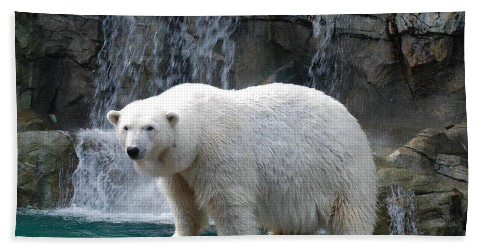 Polar Bath Sheet featuring the photograph Polar Bear 2 by Richard Bryce and Family