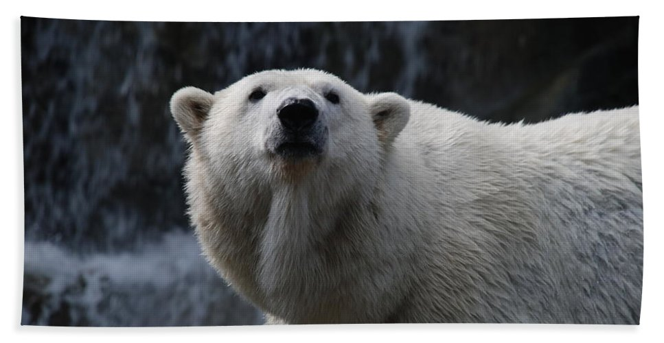 Polar Bath Sheet featuring the photograph Polar Bear With Waterfall by Richard Bryce and Family