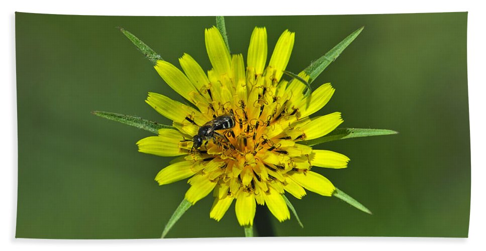 Meadow Salsify Hand Towel featuring the photograph Pollination by Tony Beck