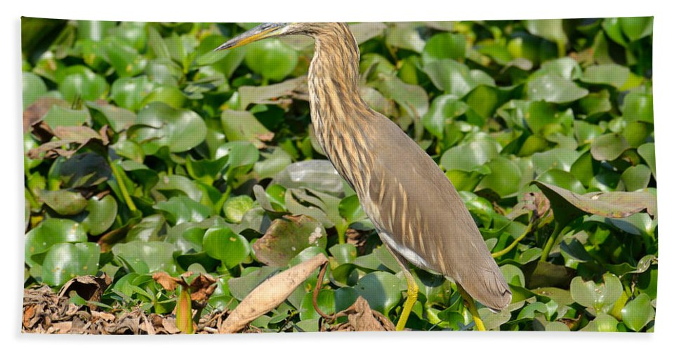 Pond Bath Sheet featuring the photograph Pond Heron by Fotosas Photography