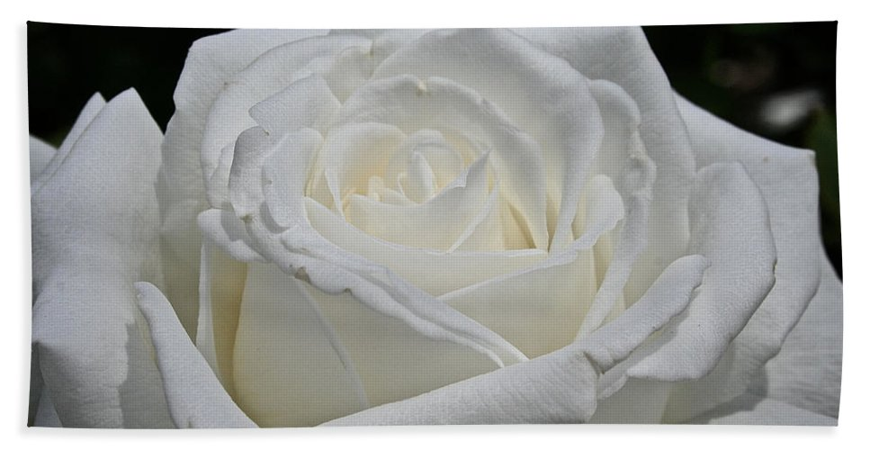 Outdoors Bath Sheet featuring the photograph Pope's Rose by Susan Herber