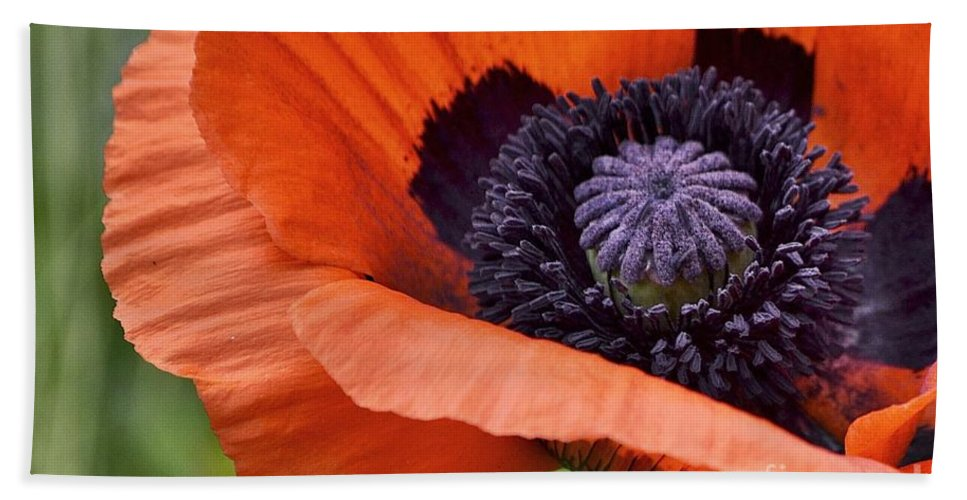 Poppy Hand Towel featuring the photograph Poppy For Peace by Traci Cottingham