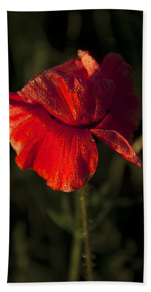 Flowres Hand Towel featuring the photograph Poppy by Svetlana Sewell