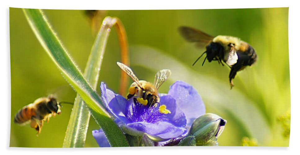 Bee Hand Towel featuring the photograph Popular Spot Cropped by Bill Pevlor