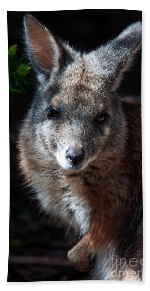 Portrait Bath Sheet featuring the photograph Portrait Of A Wallaby by Rob Hawkins