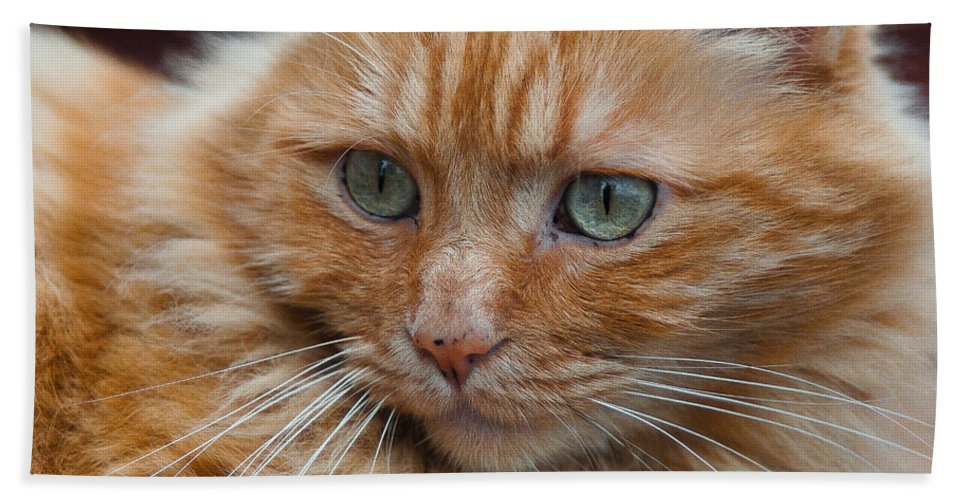 Cat Bath Sheet featuring the photograph Portrait Of An Orange Kitty by Greg Nyquist