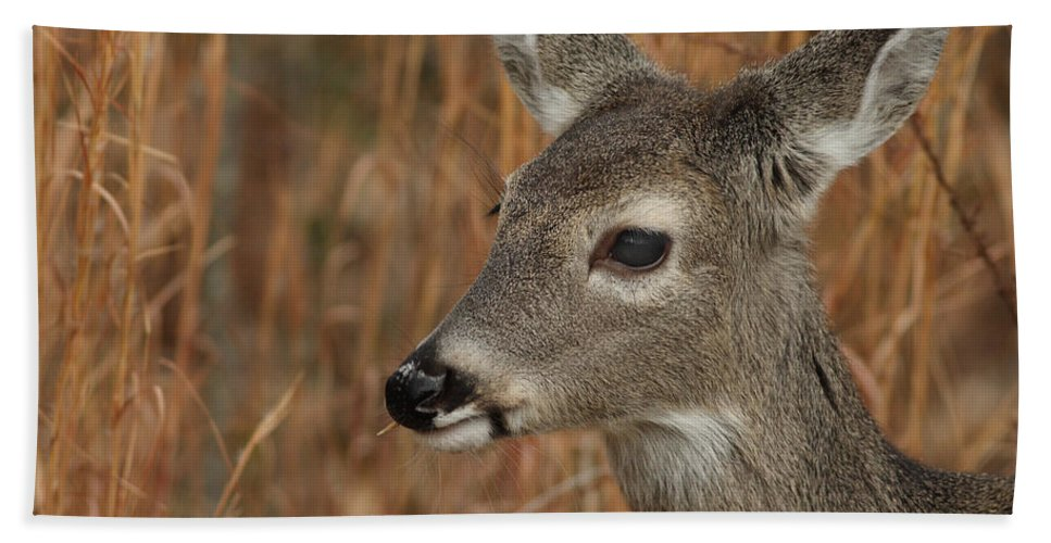 Odocoileus Virginanus Bath Sheet featuring the photograph Portrait Of Browsing Deer by Daniel Reed
