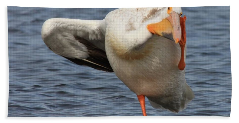 White Pelican Hand Towel featuring the photograph Poser by Shane Bechler