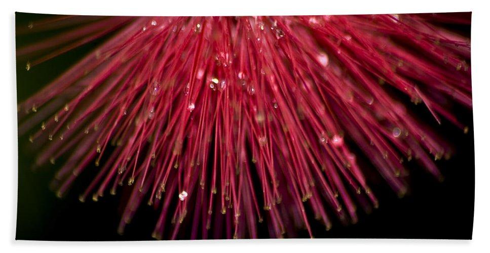 Powder Puff Bath Sheet featuring the photograph Powder Puff by Carolyn Marshall