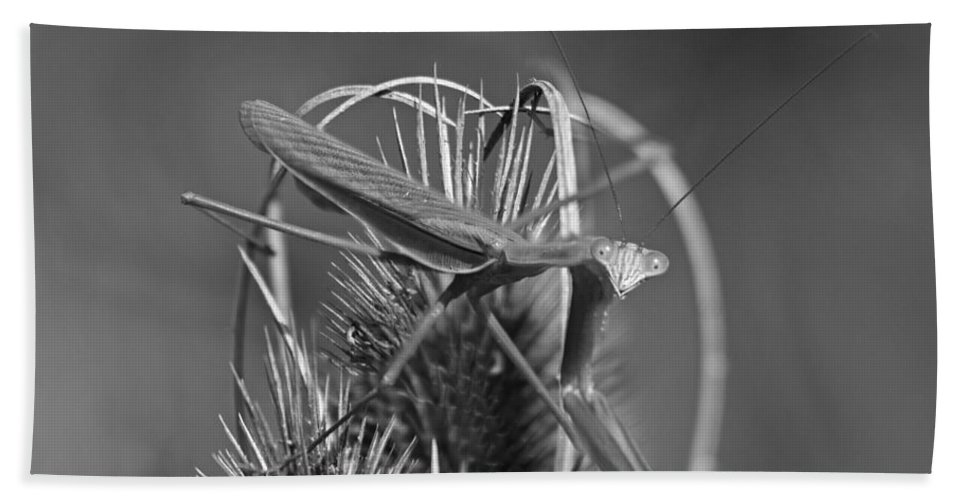 Insect Bath Sheet featuring the photograph Praying Mantis by Betsy Knapp